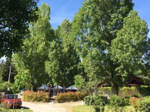 camping drome slow tourisme saillans calme nature riviere ombre