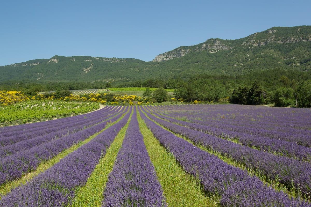 camping saillans drome provence lavande route champs huiles essentielles lavender lavenda