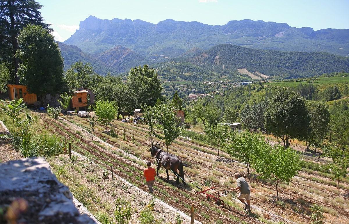"""Séjour plantes et nature Mul""""ânes Camping Les Chapelainsà Saillans en bio-vallée de la Drôme"""